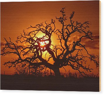 Spooky Tree Wood Print by Stephen Anderson