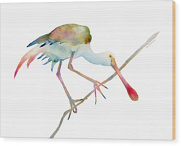 Spoonbill  Wood Print by Amy Kirkpatrick