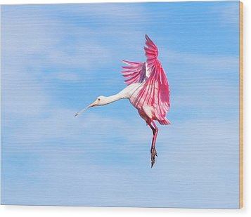 Spoonbill Ballet Wood Print by Mark Andrew Thomas