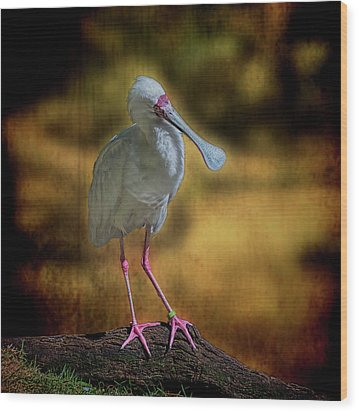 Wood Print featuring the photograph Spoonbill by Lewis Mann