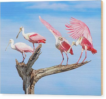 Spoonbill Party Wood Print