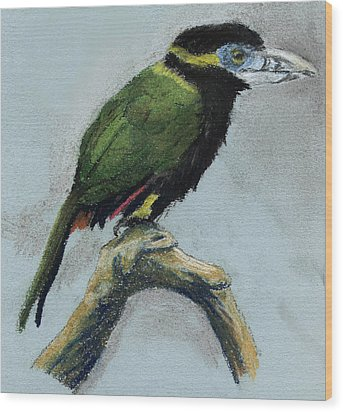 Spot-billed Toucanet Wood Print by Nelson Caramico
