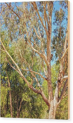 Wood Print featuring the photograph Spot The Koala, Yanchep National Park by Dave Catley