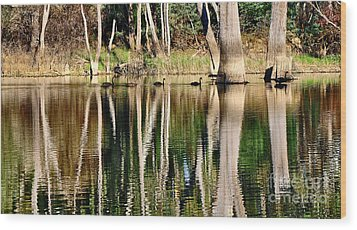 Spot The Swan Family Wood Print by Kaye Menner