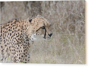 Wood Print featuring the photograph Spotted Beauty 2 by Fraida Gutovich