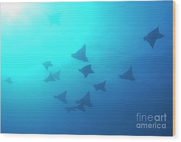 Spotted Eagle Rays Wood Print by Sami Sarkis