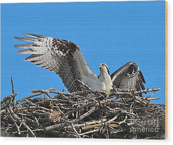 Wood Print featuring the photograph Spread-winged Osprey  by Debbie Stahre