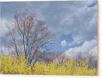 Wood Print featuring the photograph Spring 2017 by Bill Wakeley