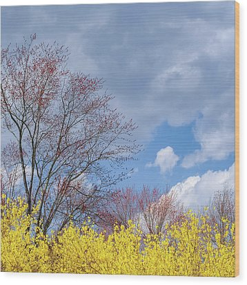 Wood Print featuring the photograph Spring 2017 Square by Bill Wakeley