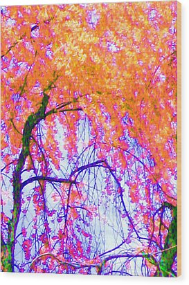 Wood Print featuring the photograph Spring Alive by Susan Carella
