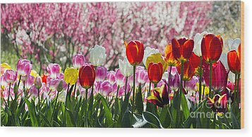 Spring Wood Print by Angela DeFrias
