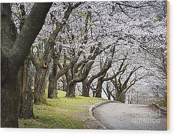 Spring Apple Orchard Wood Print by Elena Elisseeva