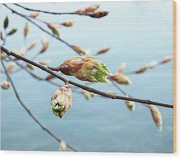 Spring At The Lake Wood Print by Karen Stahlros