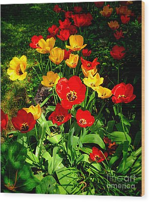 Spring Beauty Wood Print by Olivier Le Queinec