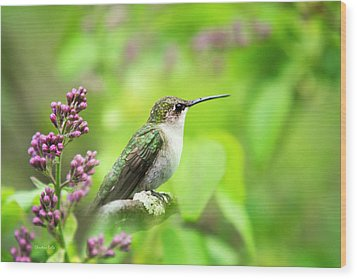 Spring Beauty Ruby Throat Hummingbird Wood Print by Christina Rollo