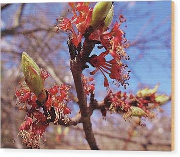 Spring Bloom #1 Wood Print