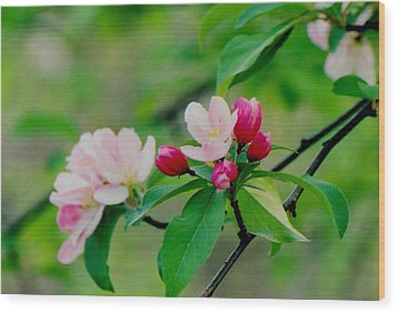 Spring Blossom Wood Print by Juergen Roth