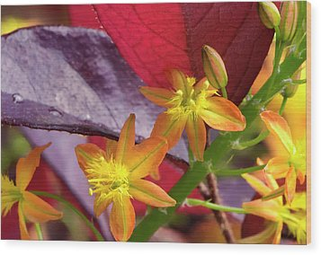 Wood Print featuring the photograph Spring Blossoms 2 by Stephen Anderson