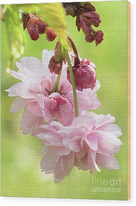 Spring Blossoms 8 Wood Print