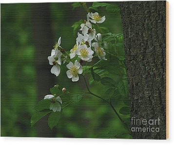 Spring Blossoms Wood Print by Deborah Johnson
