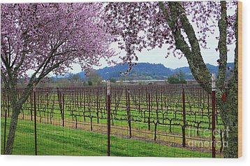 Spring Blossoms Near Calistoga Wood Print