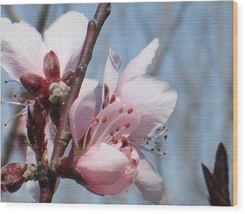 Spring Blossoms  Wood Print by Rosalie Klidies