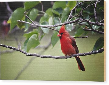 Wood Print featuring the photograph Spring Cardinal by Lana Trussell