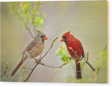 Spring Cardinals Wood Print by Bonnie Barry