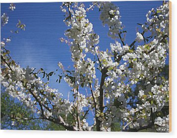 Spring Cherry Blossoms Wood Print by Mary Gaines