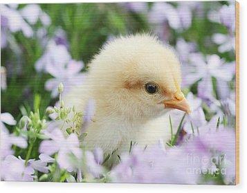 Spring Chick Wood Print by Stephanie Frey
