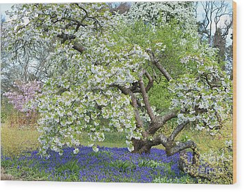 Wood Print featuring the photograph Spring Color by Tim Gainey