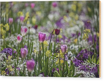 Spring Colors Wood Print by Eva Lechner