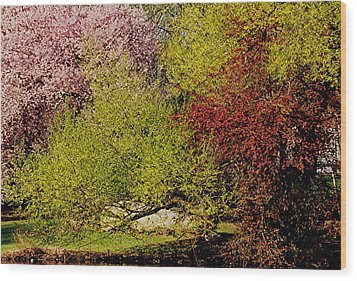 Spring Colors Wood Print by Juergen Roth