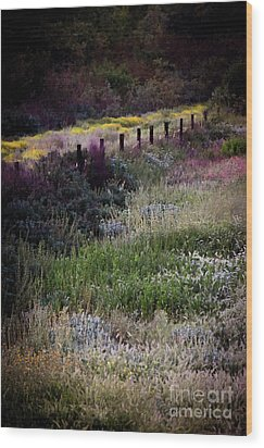 Wood Print featuring the photograph Spring Colors by Kelly Wade