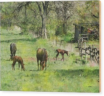 Spring Colts Wood Print by John Beck