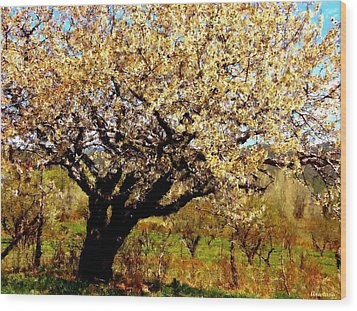 Wood Print featuring the photograph Spring Comes To The Old Cherry El Valle New Mexico by Anastasia Savage Ealy