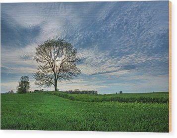 Wood Print featuring the photograph Spring Coming On by Bill Pevlor