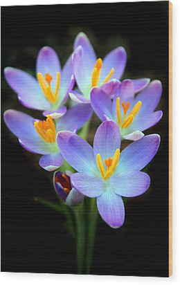 Wood Print featuring the photograph Spring Crocus by Jessica Jenney