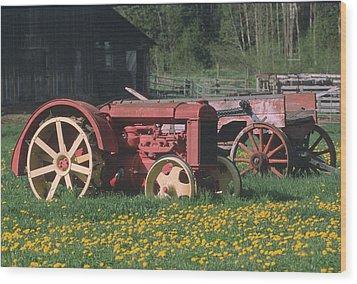 Spring Dandelions Wood Print