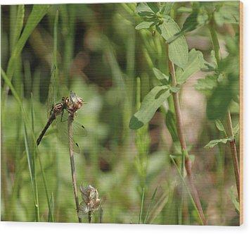 Wood Print featuring the photograph Spring Dragonfly by LeeAnn McLaneGoetz McLaneGoetzStudioLLCcom
