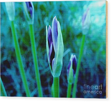 Wood Print featuring the photograph Spring Erupting Early by Marsha Heiken