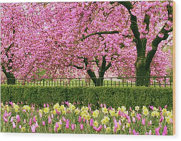 Wood Print featuring the photograph Spring Extravaganza by Jessica Jenney