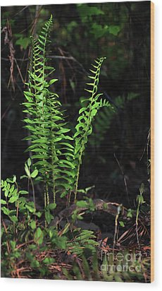 Wood Print featuring the photograph Spring Ferns by Skip Willits