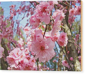 Spring Floral Art Prints Pink Tree Blossoms Wood Print by Baslee Troutman