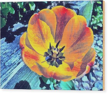 Wood Print featuring the photograph Spring Flower Bloom by Derek Gedney