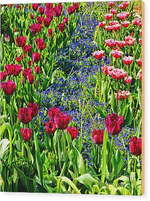Spring Flowers Impression Wood Print by Olivier Le Queinec