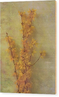 Spring Forsythia Wood Print by Catherine Alfidi