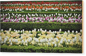 Wood Print featuring the photograph Spring Garden - Colorful Tulips by Frank Tschakert
