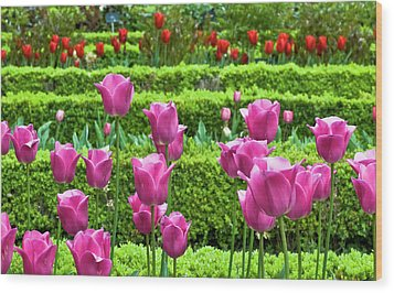 Wood Print featuring the photograph Spring Garden - Pink Tulips by Frank Tschakert