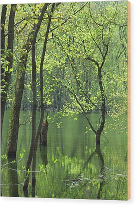 Spring Green  Wood Print by Lori Frisch
